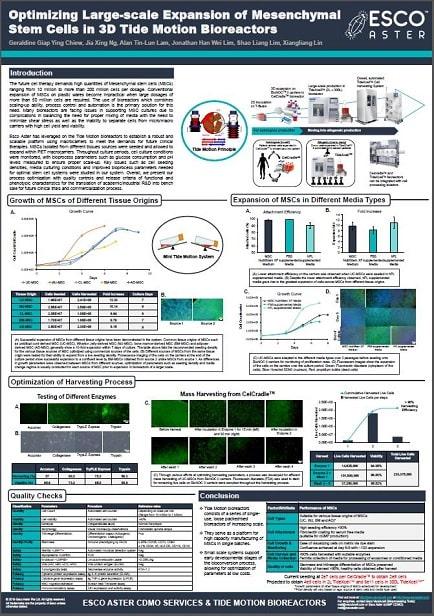 Optimizing Large-Scale Expansion of Mesenchymal Stem Cells in 3D Tide Motion Bioreactors