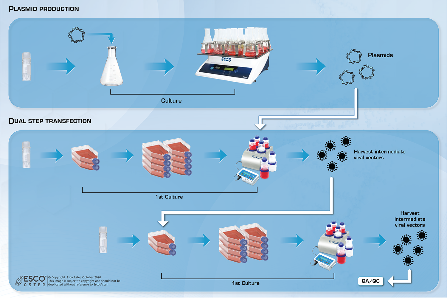 Dual-step Transient Transfection